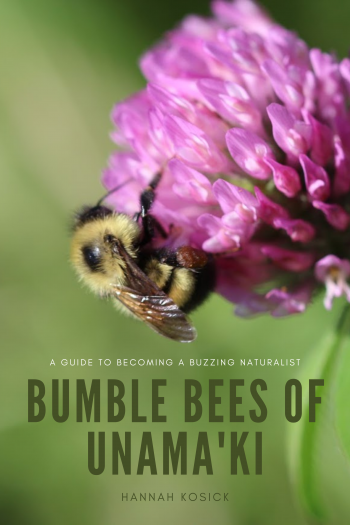 Cover image for Bumble bees of Unama'ki